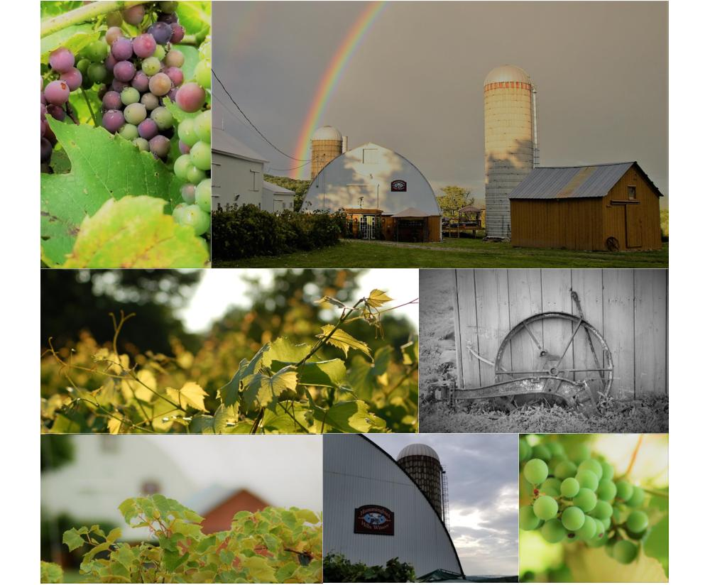 Vineyard collage with 7 scenes.